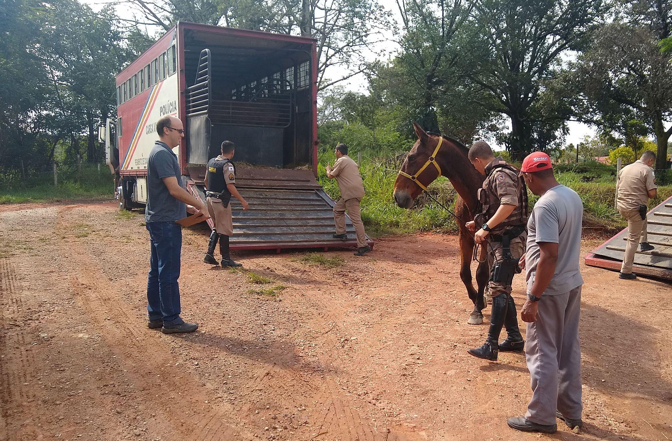 Onde vão parar os cavalos ´APOSENTADOS´ da Polícia Militar?